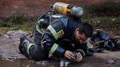 Lính cứu hỏa cho chú mèo đang hấp hối thở mặt nạ dưỡng khí