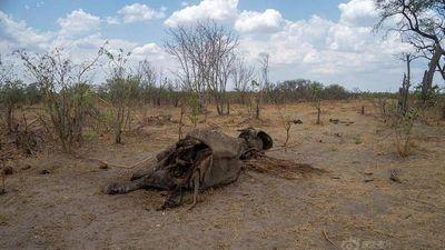 Rùng mình cảnh động vật hoang dã chết thảm vì hạn hán ở Zimbabwe