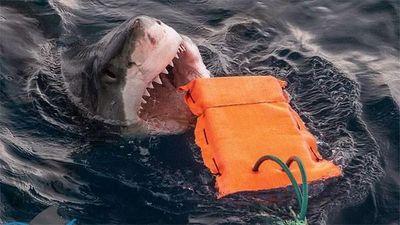 Australia nghiên cứu chất liệu chế tạo đồ bơi chống cá mập cắn