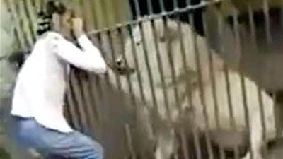 Hãi hùng nhân viên vườn thú bị sư tử tấn công ngay trước mặt du khách