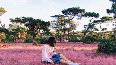Đà Lạt vào mùa cỏ hồng, khung cảnh đẹp như phim hoạt hình Nhật Bản