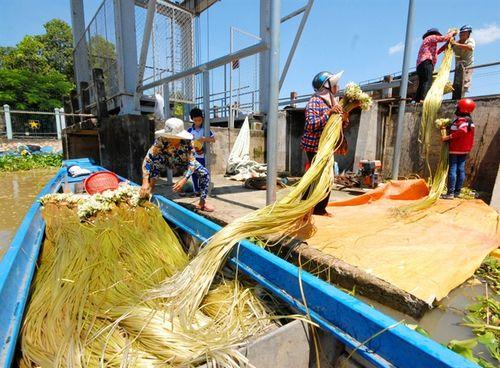 Cận cảnh mùa lũ người dân miền Tây sang Campuchia hái bông súng 'ma' về bán