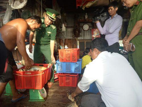 Thu giữ 15 cá thể rùa biển quý hiếm