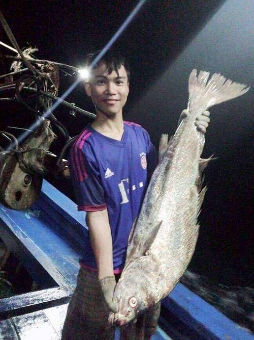 Ngư dân Quảng Trị bắt được cá lạ, nghi sủ vàng quý hiếm