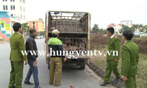 Bắt vụ vận chuyển 1,5 tấn thịt lợn mắc bệnh lở mồm long móng đi tiêu thụ
