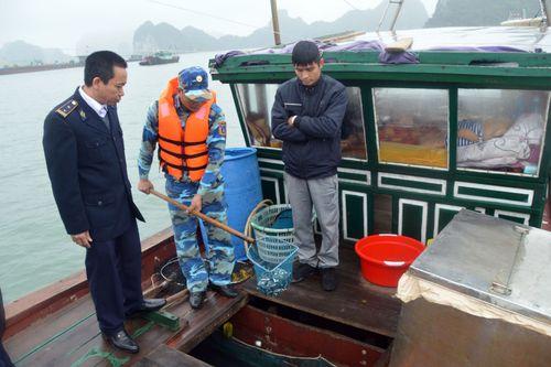 Cảnh sát biển bắt giữ tàu chở cá giống không rõ nguồn gốc