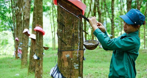 Nghệ An làm việc với tập đoàn Cao su Việt Nam nhằm tháo gỡ khó khăn về mặt bằng quy hoạch