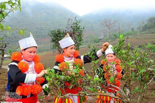 Tuyên Quang tăng tốc phát triển chè đặc sản
