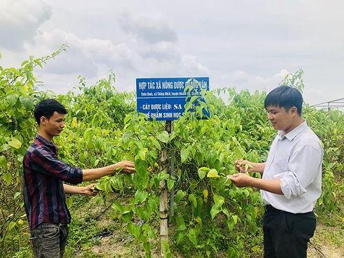 Quảng Ninh bảo tồn và phát triển bền vững các loài cây dược liệu