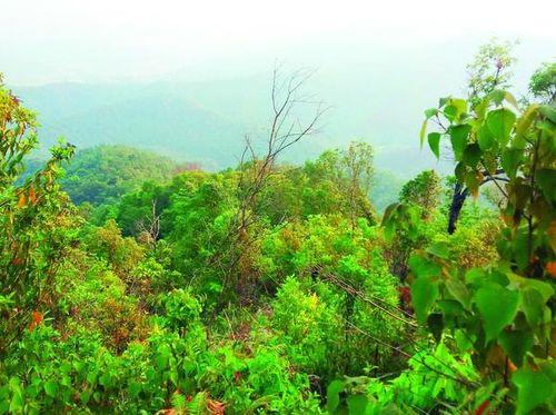 Để những cánh rừng Tây Bắc thêm xanh