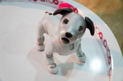 Sony mang chó robot thông minh Aibo đến Hà Nội