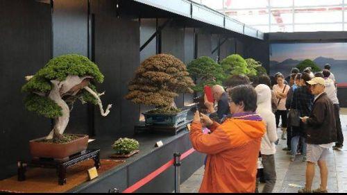 Mãn nhãn cây cảnh Bonsai & Suiseki lần đầu từ 50 nước tụ hội về Việt Nam