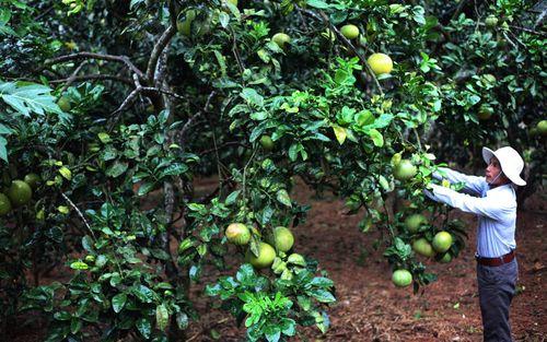 Tuyên Quang: Hiệu quả dạy nghề để nông dân xây dựng vùng chuyên canh