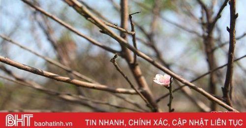 Nông dân Hà Tĩnh ứng biến với mùa đông ấm