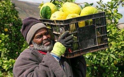 Israel ngừng nhập khẩu nông sản của Palestine thông qua ngả Jordan
