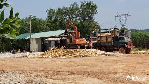 Quảng Bình: Nhà máy gỗ dăm không phép, phạt rồi vẫn hoạt động