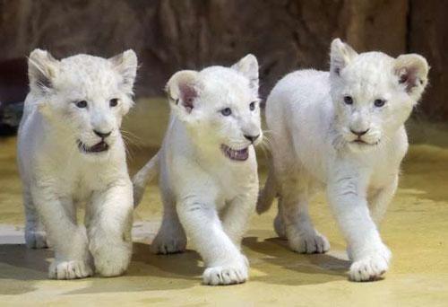 Hình ảnh đáng yêu của những 'đứa trẻ' trong sở thú
