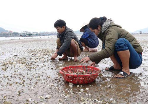 Nghệ An:Ngao chết trắng, dân khóc ròng