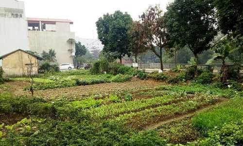 Vĩnh Phúc: Cần giải quyết dứt điểm vụ tranh chấp đất đai tại Vĩnh Yên