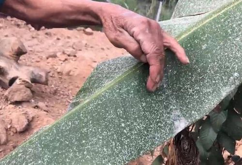 Quảng Ngãi: Chậm di dời, nhà máy tinh bột mì 'hành' dân