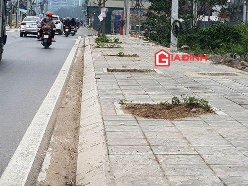 Cận cảnh về dự án cây xanh bị chết hàng loạt ở quận Nam Từ Liêm, Hà Nội