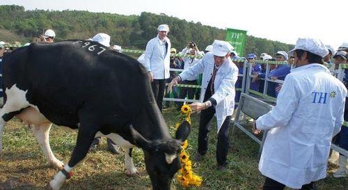 TH Group chi 135 triệu USD mua 3 trang trại gia súc ở Australia