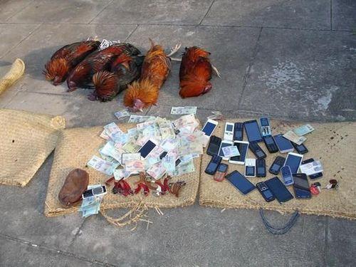 Bắt quả tang hàng chục đối tượng đánh bạc dưới hình thức đá gà ăn tiền