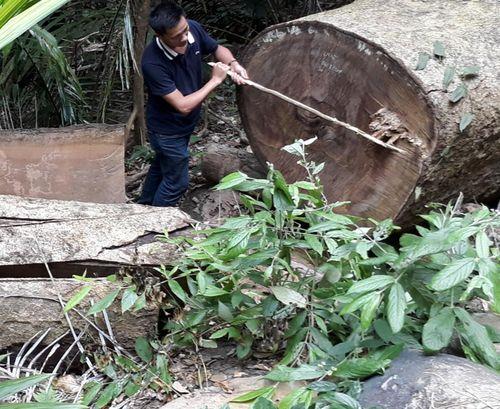 Kông Chro-Gia Lai: Phát hiện thiệt hại do phá rừng tăng gấp 4 lần