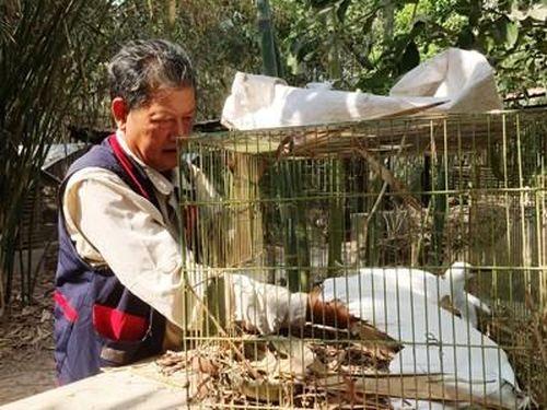Cựu chiến binh hơn 20 năm bảo vệ chim trời