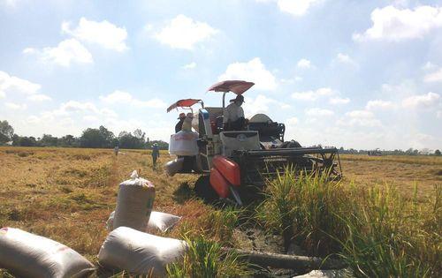 Trong khó khăn kép, ĐBSCL vẫn thắng lớn vụ lúa Đông Xuân