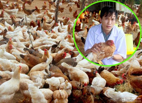Độc đáo cách nuôi gà như chăm 'quý tộc' của ông chủ 9X xứ Nghệ
