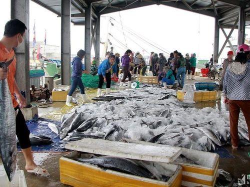 Tin Ngư nghiệp: Ngư dân Nghệ An trúng đậm cá thu