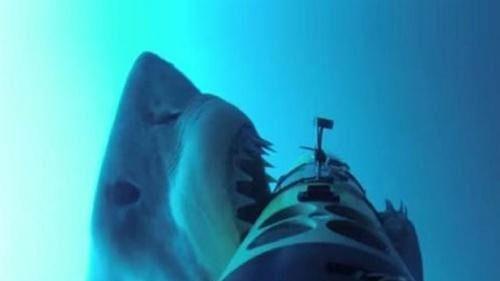Nỗi oan của cá mập khi cáp quang bị đứt