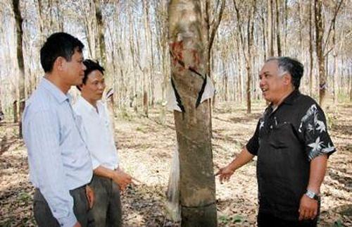 Cựu chiến binh làm giàu trên đất rừng