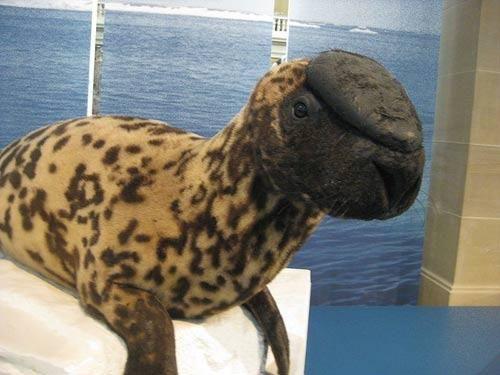 Đây là những loài động vật có nguy cơ tuyệt chủng trên thế giới
