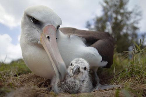 Những bức ảnh động vật hoang dã ấn tượng trên thế giới