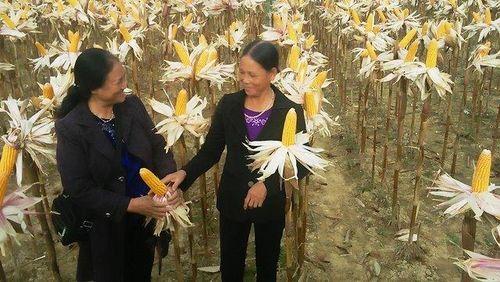 Tất cả các xã huyện Phú Bình đạt chuẩn nông thôn mới