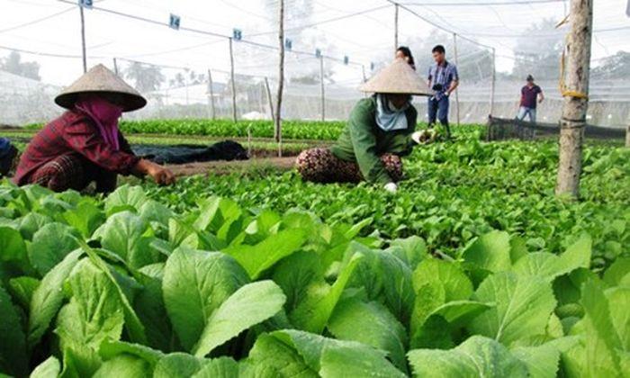 Phát triển nông nghiệp hữu cơ theo xu hướng hội nhập quốc tế