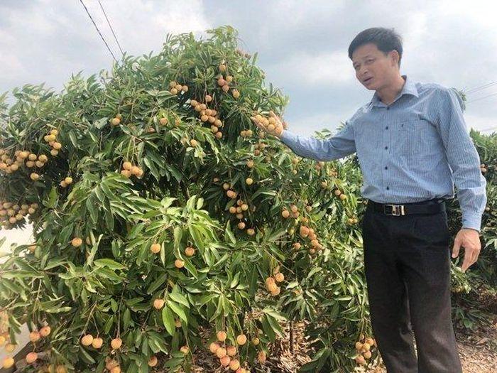 Báo Nhân Dân: Saigon Co.op đẩy mạnh tiêu thụ vải thiều Lục Ngạn