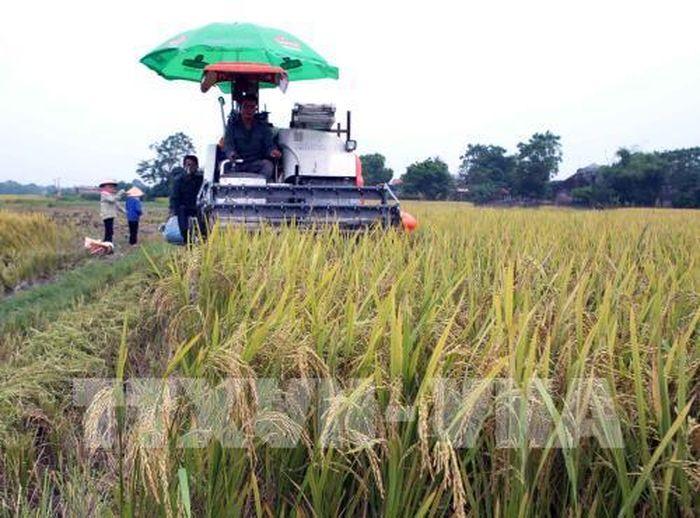 Báo Bnews: Bắc Giang ưu tiên nguồn lực hỗ trợ các xã được giao đạt chuẩn nông thôn mới