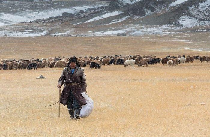 Cuộc sống của những người thợ săn bằng đại bàng ở miền Tây Mông Cổ (Phần II)