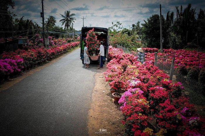 Những làng hoa nổi tiếng ở miền Tây