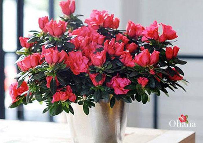 Ngày Tết nên lưu ý chọn hoa như thế nào. ảnh 4