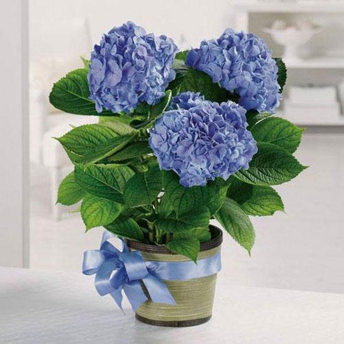 Ngày Tết nên lưu ý chọn hoa như thế nào. ảnh 3