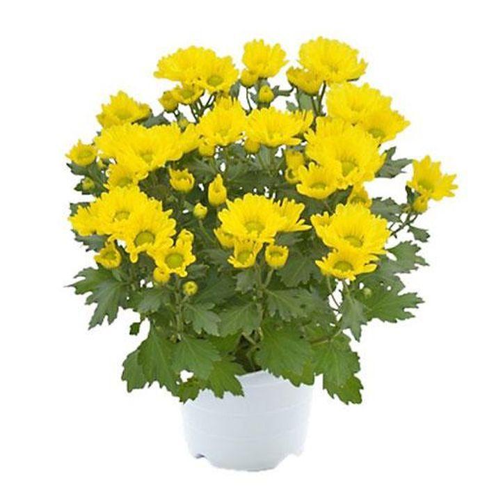 Ngày Tết nên lưu ý chọn hoa như thế nào. ảnh 1