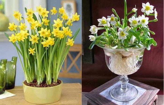 Ngày Tết nên lưu ý chọn hoa như thế nào. ảnh 2