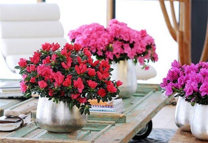 Ngày Tết chưng hoa gì vừa đẹp vừa tốt cho sức khỏe. ảnh 10