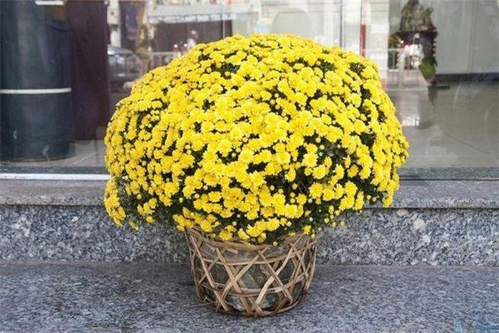 Ngày Tết chưng hoa gì vừa đẹp vừa tốt cho sức khỏe. ảnh 2