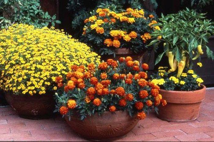 Ngày Tết chưng hoa gì vừa đẹp vừa tốt cho sức khỏe