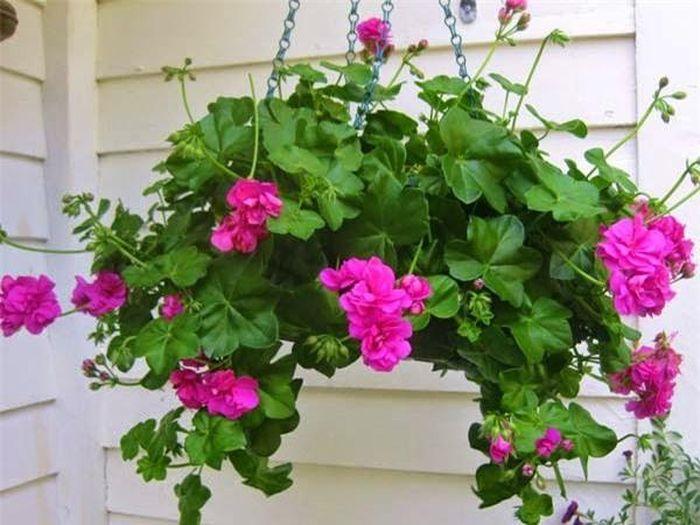 Ngày Tết chưng hoa gì vừa đẹp vừa tốt cho sức khỏe. ảnh 11